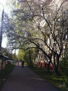 blommande träd liten